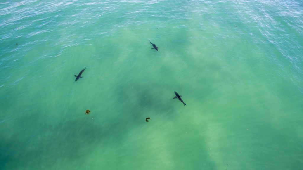 How To Avoid Getting Attacked By A Shark - Surfline