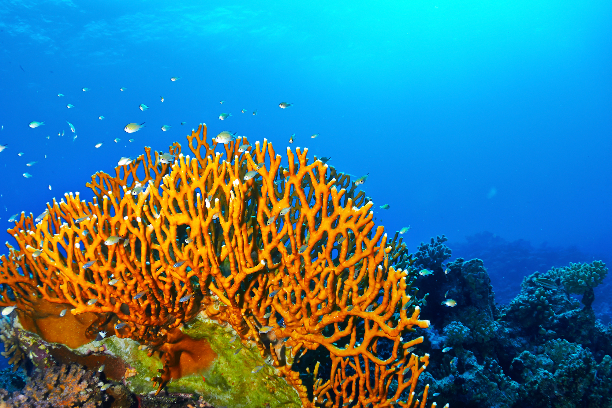 Step on Fire Coral? Here's Everything You Need to Know