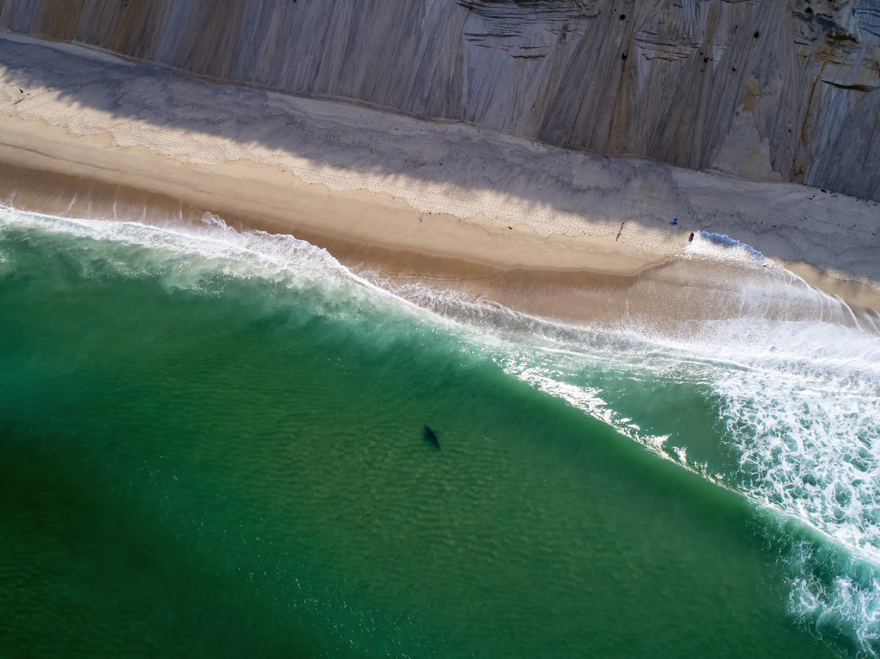 Update: Cape Cod's Great White Shark Situation - Surfline